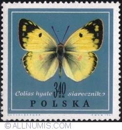 Image #1 of 3,40 złotego 1967 - Pale clouded yellow. (Colias hyale)