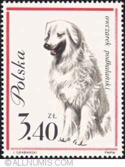 Imaginea #1 a 3,40 złotego - Tatra Mountain sheep dog