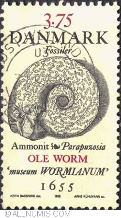 Image #1 of 3,75 krone - Ammonite, Ole Worm