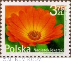 Image #1 of 3,75 Zloty 2009 - Pot marigold (Calendula officinalis)