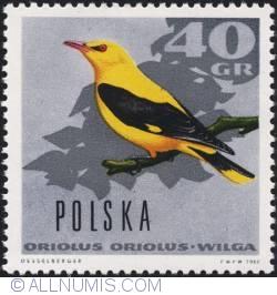 Image #1 of 40 groszy 1966 - European golden oriole.