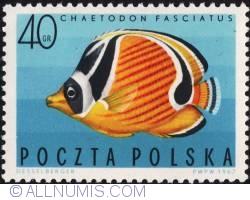 Imaginea #1 a 40 groszy 1967 - Chaetodon fasciatus