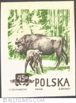 Image #1 of 45 groszy 1954 -  Bison (imperf.)