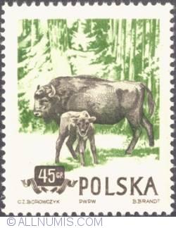 45 groszy 1954 -  Bison