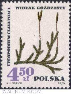 Image #1 of 4,50 złotego 1967 -Ground pine (Lycopodium clavatum)