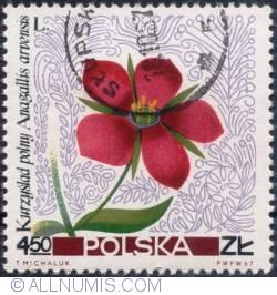 Image #1 of 4,50 złotego 1967 -Scarlet pimpernel (Anagallis arvensis)