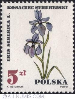 Image #1 of 5 złotych 1967 - Iris sibirica.