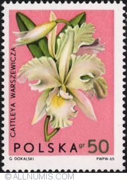 Image #1 of 50 groszy 1965 -Warscewicz's Cattleya (Cattleya warscewiczii)