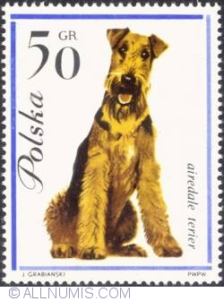 50 groszy Airedale terrier,