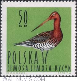 Image #1 of 50 groszy - Black-tailed godwit