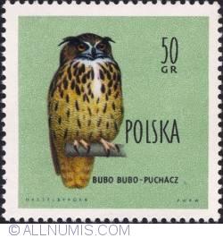 Image #1 of 50 groszy - Eagle owl.