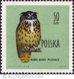 Imaginea #1 a 50 groszy - Eagle owl.