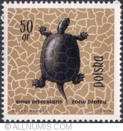 Image #1 of 50 groszy - European pond turtle (Emus Orbicularis)