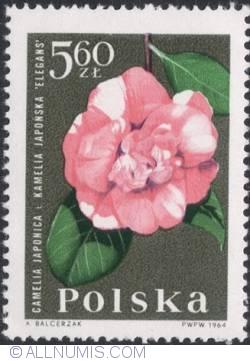 Image #1 of 5,60 złotego 1964 - Camellia (Camellia japonica)