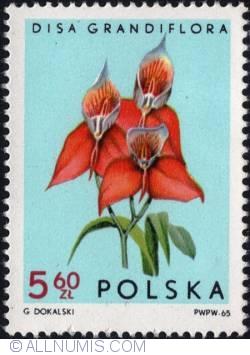Image #1 of 5,60 złotego 1965 - Red Disa (Disa uniflora)