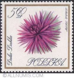 Image #1 of 5,60 złotego 1966 - Dahlia