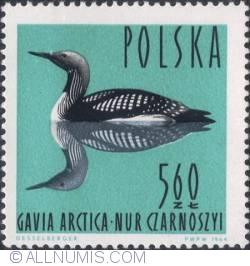 Image #1 of 5,60 złotego - Black-throated diver