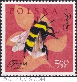 Image #1 of 5,60 złotego- Bumble bee.
