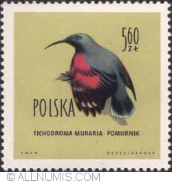 Image #1 of 5,60 złotego- Wall creeper.