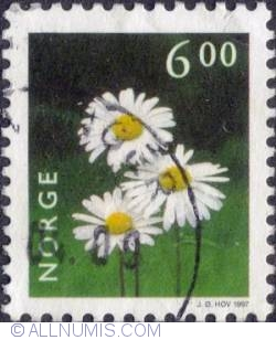 Image #1 of 6 kroner 1997 - Oxeye daisy