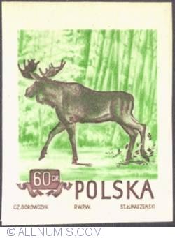 Image #1 of 60 groszy 1954 -  European elk. (imperf.)