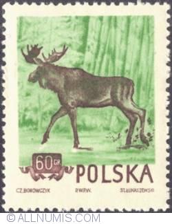 Image #1 of 60 groszy 1954 -  European elk