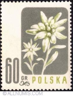 Image #1 of 60 groszy - Edelweiss