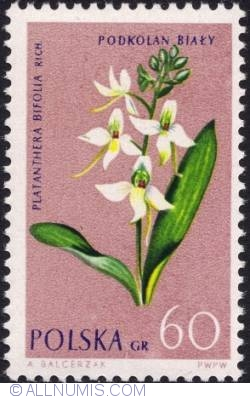 Image #1 of 60 groszy - Lesser Butterfly-orchid