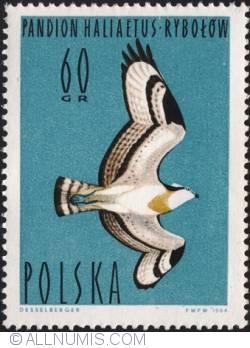 Image #1 of 60 groszy Osprey