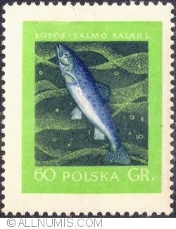 Image #1 of 60 groszy - Salmon