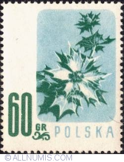 Image #1 of 60 groszy - Sea Holly.
