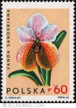 Image #1 of 60 groszy 1965 - Vanda sanderiana