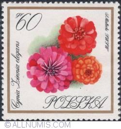 Image #1 of 60 groszy1966 - Zinnias
