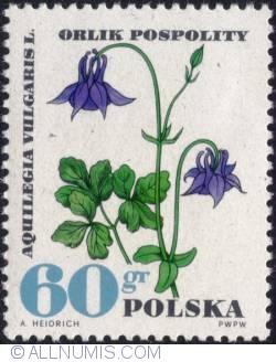 Image #1 of 60 groszy1967 - European columbine (Aquilegia vulgaris)