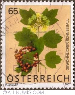 Image #1 of 0,65 €s 2007 - Guelder Rose (Viburnum Opulus)