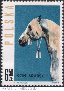 Image #1 of 6,50 złotego -The head of an Arabian horse