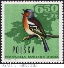 Image #1 of 6,50 złotego1966 - Chaffinch.