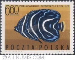 Imaginea #1 a 6,60 złotego1967 - Pomacanthus semicirculatus