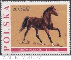 "Image #1 of 6,60 złotego1967 - Stallion ""Ofir."""