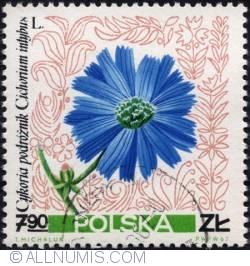 Image #1 of 7,90 złotego1967 - Chicory (Cichorium intybus)