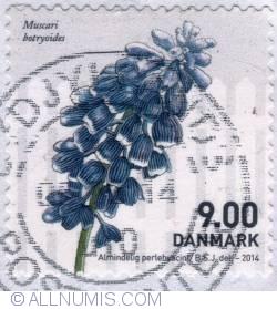 Image #1 of 9 Kroner 2014 - Perlehyacint (grape hyacinth)