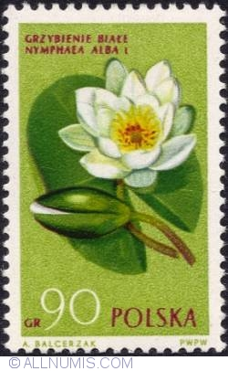 Image #1 of 90 groszy-  Water lily.