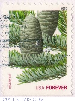 Image #1 of First Class Forever Stamps - Balsam Fir