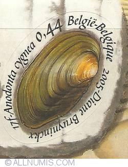0,44 Euro 2005 - Shells - Anodonta cygnea