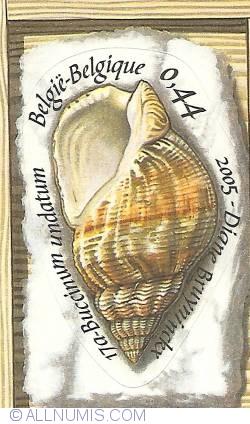 Imaginea #1 a 0,44 Euro - Shells - Buccinum undatum