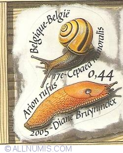 Image #1 of 0,44 Euro 2005 - Shells - Cepaea nemoralis and Arion rufus