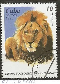 10 Centavos 1995 - Lion