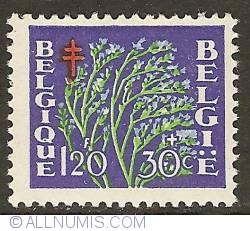 Image #1 of 1,20 Francs + 30 Centimes 1950 - Dwarf Everlasting