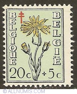 Image #1 of 20 + 5 Centimes 1949 - Arnica