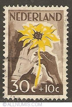 Image #1 of 30 + 10 Cent 1949 - Sun Flower